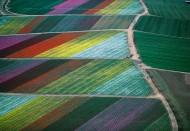 オランダチューリプ畑